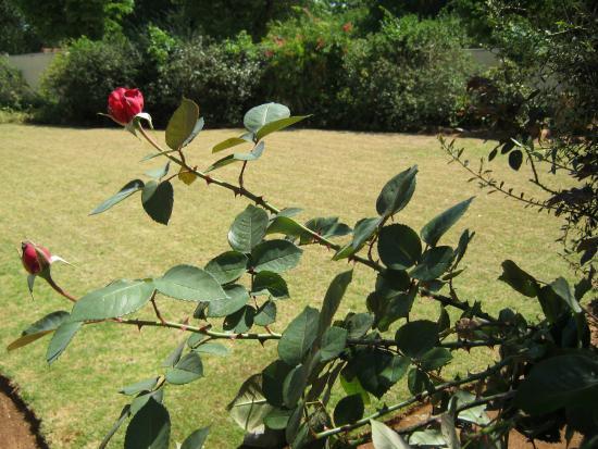 Terrylin Backpacker's Hostel: Rose Garden