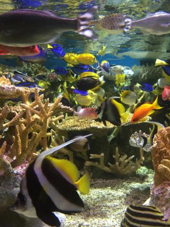 Beautiful Colorful Fish Picture Of New England Aquarium Boston Tripadvisor