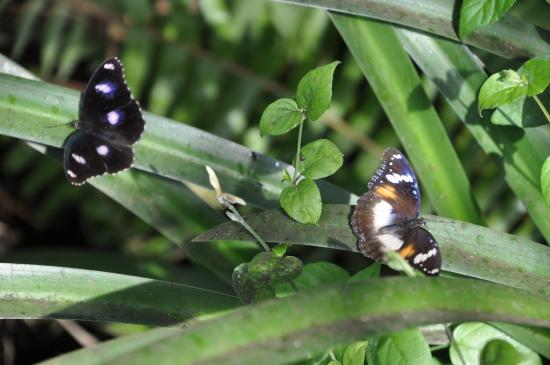 Batchelor Butterfly Farm and Pet Garden