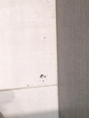 Bad Direkt dreckiger boden im bad direkt nach dem putzen picture of