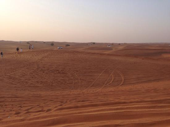 Arabian Night Safari - Day Tours