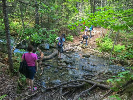 Worksheet. Fundy National Park Hiking Moose Horn Trail  Picture of Fundy