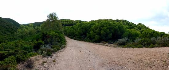 Kythera Hiking: Китирский лес, очень красивый после дождя.