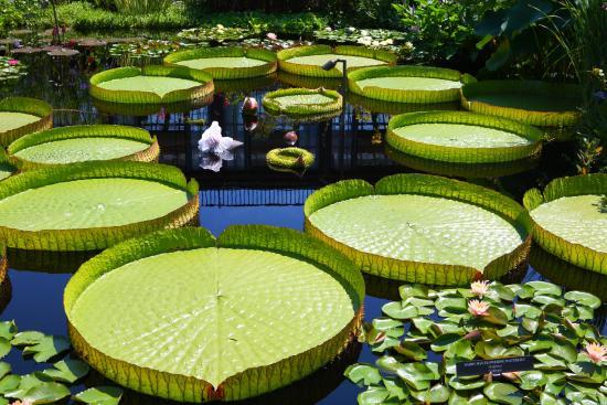 Attractive Longwood Gardens: Longwood Garden
