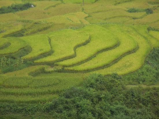 Yen Bai Province, Vietnã: นาขั้นบันได