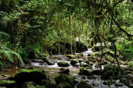 Kenema, Sierra Leone: Foresta pluviale