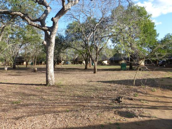Satara Rest Camp: Grounds around the houses