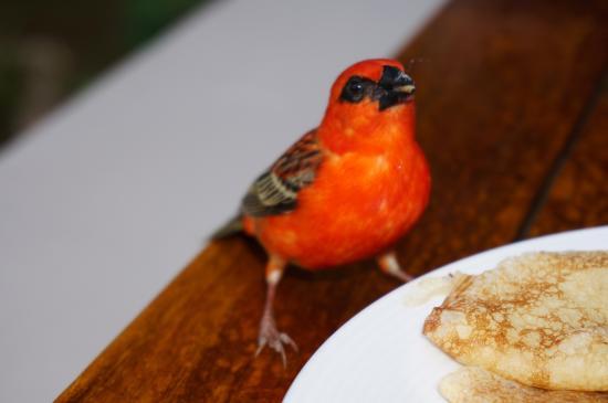 Le Cardinal Exclusive Resort: LE Cardinal