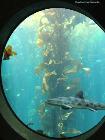 Coral Reef Picture Of Monterey Bay Aquarium Monterey