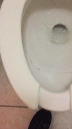 Days Inn by Wyndham Columbus Fairgrounds: dirty toilet. full when we got to room