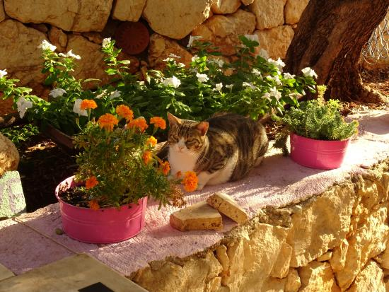 Local Cat Picture Of Pasha Apart Hotel Kalkan Tripadvisor