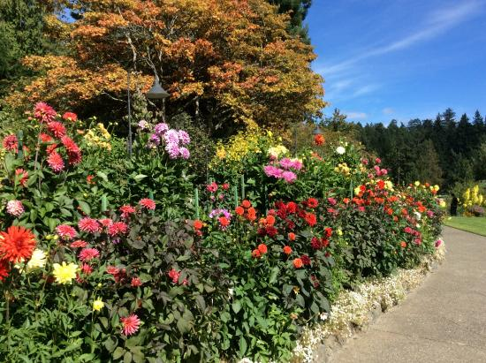 butchart gardens map. the butchart gardens: fantastic dahlias - september gardens map r