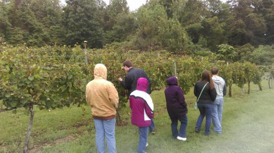 Brooks Hill Winery: Nice wine