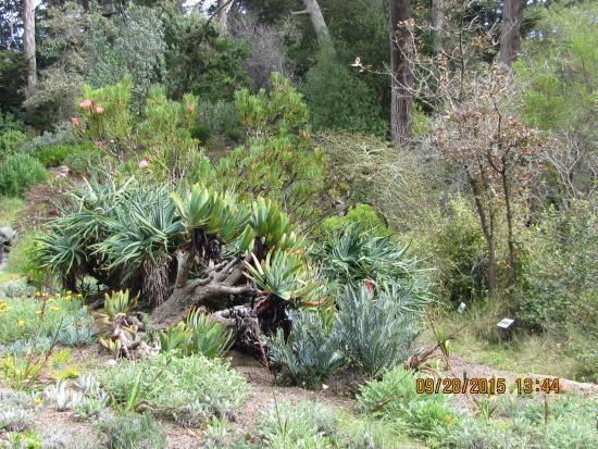 Botanical Garden Picture Of Golden Gate Park San