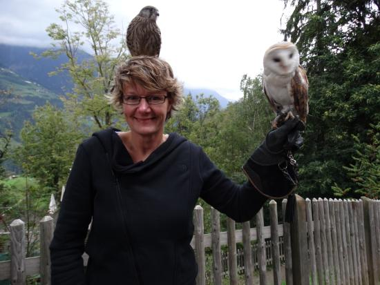 Hotel Panorama: Up close & personal with owls.
