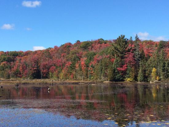 Glenview Cottages: Oct 7, 2015 Fall colour at Glenview