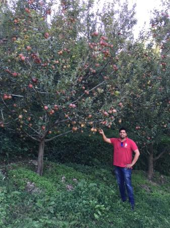 Apple Orchard in Thanedar (Narkanda, Himachal Pradesh)