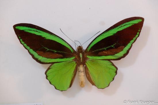 Daintree Entomological museum