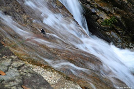 Tiantai County, Kina: bird in waterfalls