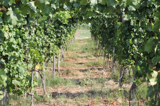 Winery Despotika