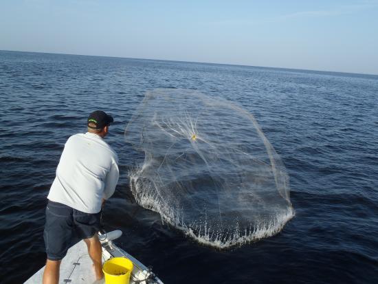 Cast netting bait picture of southwest florida fishing for Punta gorda fishing