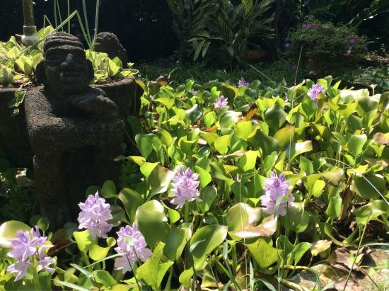 The Lotus Garden: photo0.jpg