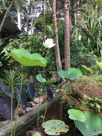 The Lotus Garden: photo1.jpg