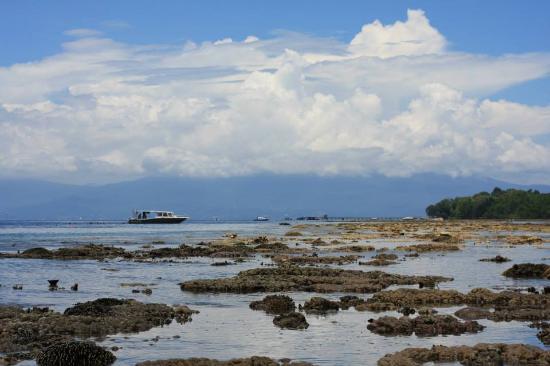 Living Colours Dive Resort: Low tide