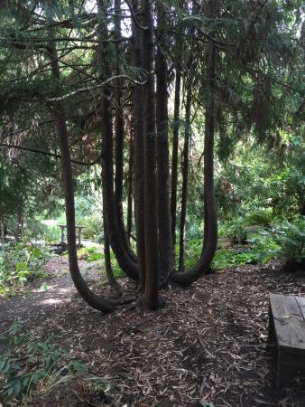 Western Hills Garden: photo3.jpg