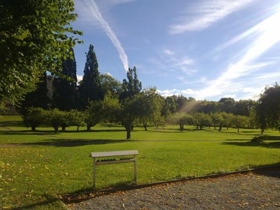 Upsala, Suecia: Apple trees