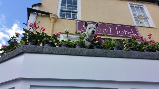 The Swan Hotel: Dog friendly Hotel Hamish being nosey