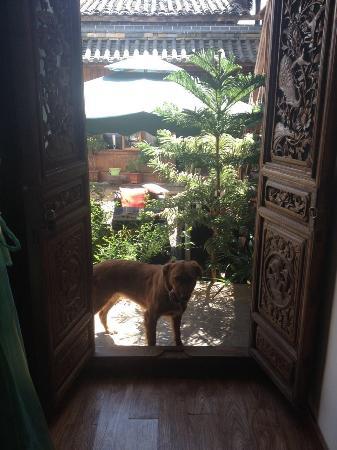 Honey the guard dog