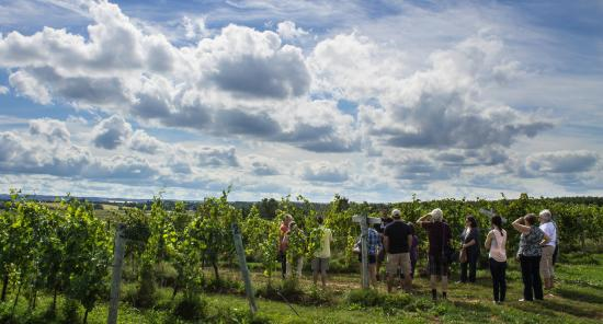 Canning, Canadá: A Guided Vineyard Tour