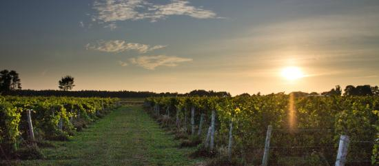 Canning, Canadá: A Walk Amongst the Vines