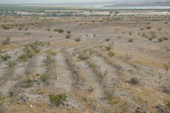 Mystic Maze: Photo of Maze