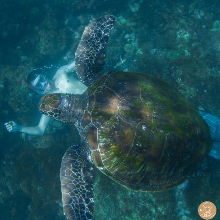Fingal Head, Австралия: Cook Island Turtles