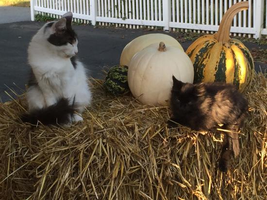 Harvest Moon Bed and Breakfast: photo0.jpg