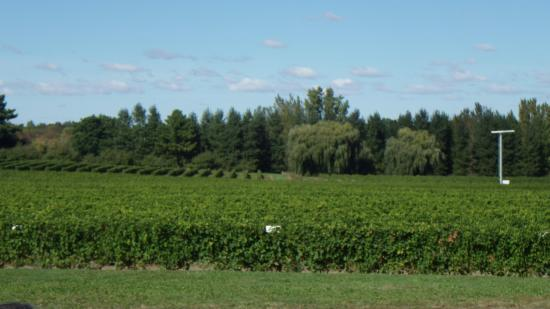 Dunham, Kanada: Vignobles de l'Orpailleur