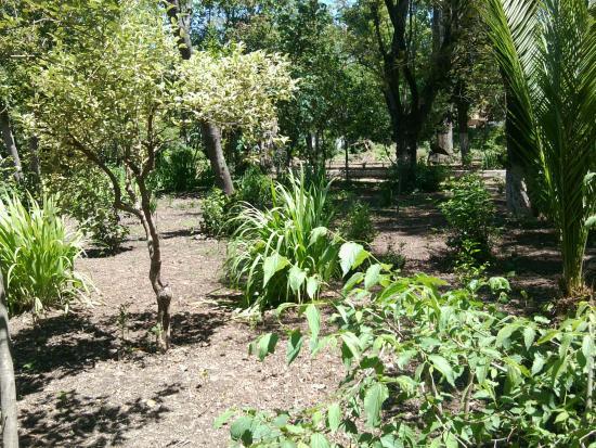 Arbres et plantes du jardin picture of jardin bizot for Jardin du plantes