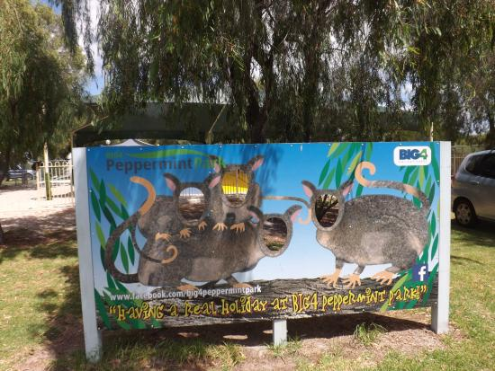 BIG4 Peppermint Park: Western Ringtail Possum sign for tourists