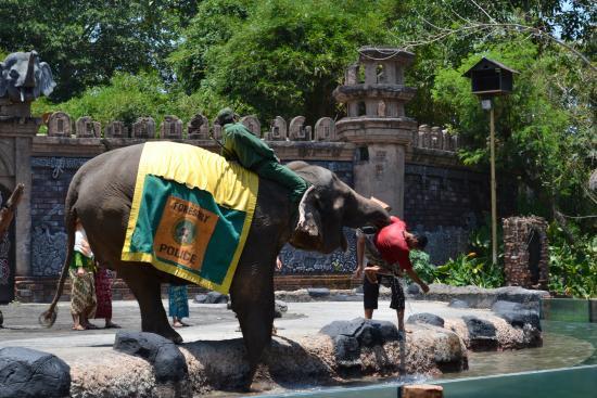 Elephant show - Picture of Bali Safari & Marine Park ...
