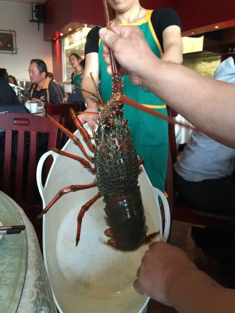 Flourishing Cafe: Lobster3KG