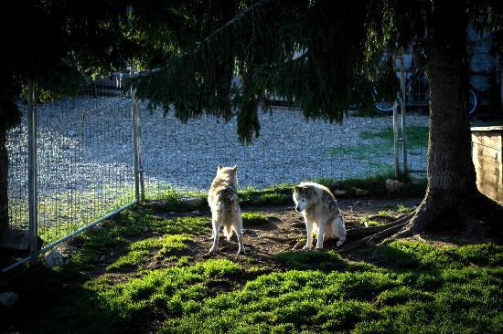 La Ferme des Huskies
