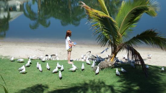 Bay of Palms Resort: feeding the locals