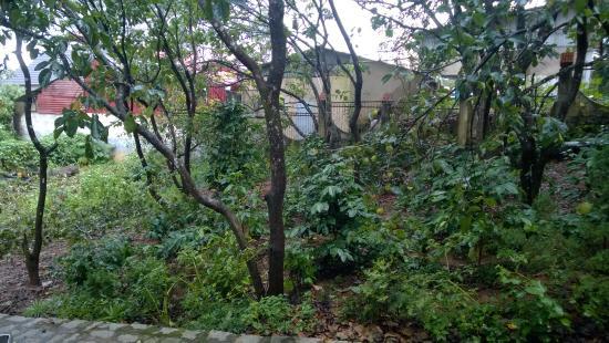 Dalat Garden Homestay : Garden view