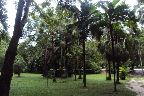 Sobha Botanical Garden: Stately palms