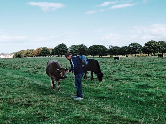 Beverley Westwood: new my friend cow :-)