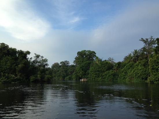 Proboscis Monkey River Cruise: The view along the river