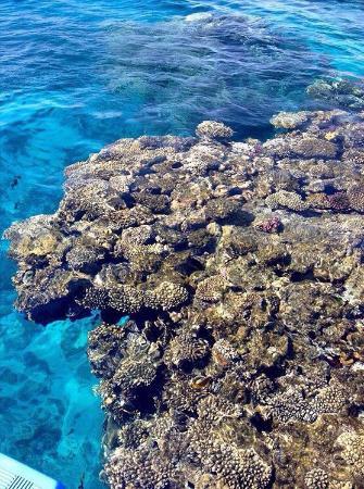 Sultana Beach Resort: Красное море