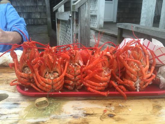 ... LBS EACH WE COULDN'T STOP - Picture of Roy Moore Lobster Co, Rockport